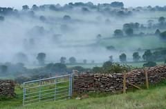 Mendip Mist (Mukumbura) Tags: morning trees mist fog wall landscape gate somerset farmland levels gettyimages mendips deerleap