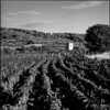 Wineyards and Watch tower