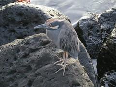 Galapagos - San Cristobal-202