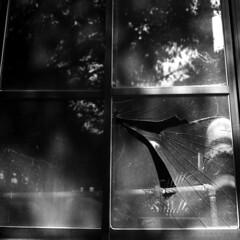 img329 (阿智) Tags: bw 120 film darkroom taiwan d76 黑白 fujiacros100 底片 暗房 沖片 rolleiflex35a
