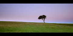 The Lone Tree (Rodney Campbell) Tags: sunset plant tree grass bondi australia golfcourse pastels newsouthwales cpl northbondi gnd09