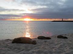 Galapagos - San Cristobal-231