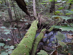 Moos (kirstenreich) Tags: tree natur wald brandenburg baum moos landschaften buckow