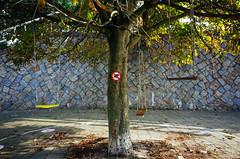 Swings hanging on a tree 2 (VesaM) Tags: plants signs tree nature ecology scenery land environment recreation environmentalism ricohgr urbanlandscape ecosystem playgrounds outdoorrecreation urbanstreet sportsrecreation