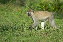 Lake Mburo National Park (Globespotter) Tags: park lake national uganda mburo ouganda