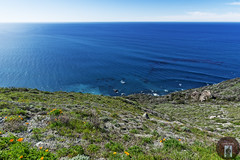 California Big Sur Coast (randyandy101) Tags: californiacentralcoast cambria california cambriapinesbythesea coast coastline cliffs clouds raggedpoint beach bigsur bluesky bigsurhighway blue bay bluffs sky sea seascape surf sand sun sunset shoreline shore seaside shimmering seaweed reflection reflective photography panorama vista view ocean outdoors outdoor offshore lowclouds whitewater waves water whiteclouds wildflowes californiawildflowers rock rocks road pacificocean pacific
