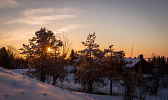 Golden Winter (abdurj) Tags: sunset sunrise morning sun sky clouds light tree travel seasons winter snow snowy frozen cold white covered landscape frost dawn wood nature weather ice evening outdoors season dusk oslo norway no