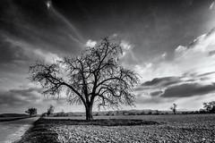 Waiting for the new Life... (Ody on the mount) Tags: anlässe bäume em5ii fototour himmel mzuiko918 omd olympus pflanzen schwäbischealb wege wolken bw monochrome sw