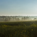 219-365v3+Misty+Morning+over+the+Fields