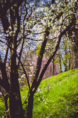 IMG_5196 (TuddMSK) Tags: nature portrait action landscape leaves spring cherry blossom tree outdoors canon eos 600d digital photography art colors