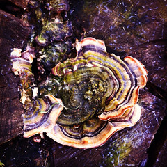 102/365 #365DaysChallenge Ça champignonne à Alfortville (melina1965) Tags: 365dayschallenge instagramapp square squareformat iphoneography printemps spring valdemarne alfortville bois wood îledefrance avril april 2017 champignon champignons mushroom mushrooms arbres arbre tree trees