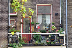 Gezellig balkon in de Dordtse binnenstad (Nicolette Vermeulen) Tags: balkon balcony dordrecht dordt detail nicolette vermeulen huis house raam deur bloempot bloempotten thuis zuidholland straat street home homedecoration nederland netherlands holland