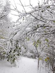 IMG_2830 (sjj62) Tags: s90 snow snowscape lith lakeinthehillsil winter winterscape