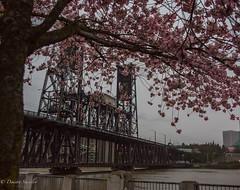 Steel Bridge blossoms (Dimitri_Stucolov) Tags: portland oregon steelbridge cherrytreeblossoms park spring willametteriver pdx