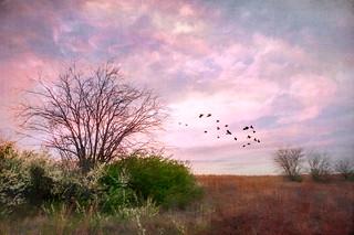 The Edge of Springtime-1196