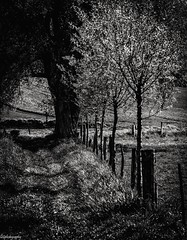 Path through the nature/Chemin vers la nature (quentin.spitaels) Tags: noiretblanc blackandwhite nature tree arbre countryside campagne path chemin contraste contrast quiet calme belgium belgique wallonia wallonie brabantwallon grezdoiceau fuji fujifilm fujixt1 xc50230mm qsphotography