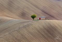 Aspettando il verde... (leopalm79) Tags: nature italy marche hills colline italia paesaggio landscape natura casolare pittura dipinto quadro picture painting
