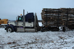 Haulin' to The Falls (jr-transport) Tags: kenworth logging w900 w900l custom heavy logger log poplar popple wood epa