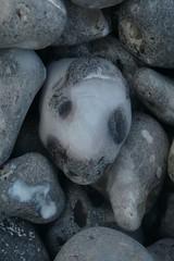 Un peu comme un blobfish (mistigree) Tags: caillou pierre galet normandie fécamp visage