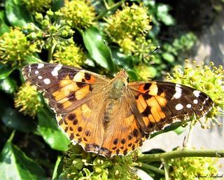 Butterfly 1204
