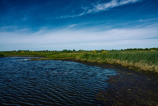 Wetlands - Film Look