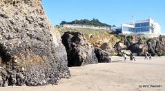 DSC_0227 (rachidH) Tags: scapes views pacific ocean sealrocks cliffhouse sutro baths tide lowtide lobos pointlobos oceanbeach sanfrancisco sf sanfran california rachidh nature