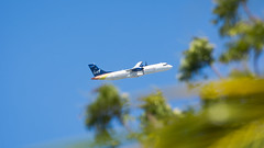 LIAT Through the Palms (Ben_Senior) Tags: simpsonbay sintmaarten saintmartin sxm tncm princessjulianaairport fly aircraft aviation flight flying airplane plane airliner airline sky blue clear foliage tree palm palmtree caribbean green yellow orange bensenior focus outoffocus dof depthoffield aperture airport takeoff climb climbout runway dutchwestindies dutchcaribbean nikond7100 nikon d7100 atr atr72 liat turboprop prop propeller v2lia