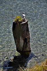 Pukenui, New Zealand (Snuffy) Tags: northisland newzealand pukenui level1photographyforrecreation