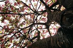 Climb (AlfieChallis) Tags: nature naturephotography tree trees flower flowers bark climb ascend spring sun canon 700d canon700d alfie challis photography photo photograph alfiesspace