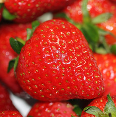 Wearing Your Seeds On Your Sleeve! (RiverCrouchWalker) Tags: memberschoiceseeds macromondays strawberries seeds red fruit wearingyourseedsonyoursleeves macro stalks berries bokeh dimples
