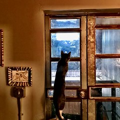 Beyond the Glass Door (Roger Hilleboe) Tags: cats felines kittens developement growth