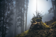 Tree stump in fog (Manuel.Martin_72) Tags: graubünden swissalps switzerland foggy magic mysterious forest grass trees woods moss treetrump fog
