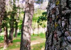 Bosco (fabiocalcaterra) Tags: bosco albero natura verde tronco sonya6300 sigma30mm14