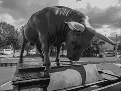 A Load of Bull (Steve Taylor (Photography)) Tags: animal art digital sculpture monochrome blackandwhite monotone metal bronze newzealand nz southisland canterbury christchurch city cloud sunny sunshine artgallery bull chapman'shomer piano michaelparekowhai