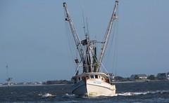 Lady Michelle (Gerry Dincher) Tags: southport northcarolina brunswickcounty capefearriver estuary smalltown smalltownnorthcarolina boat boats workingboats shrimpboat ladymichelle brunswickcatch