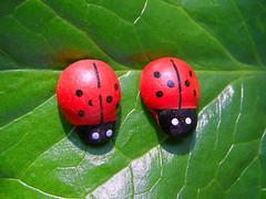 :) (Alin B.) Tags: alinbrotea spring march april ladybug ladybird funny leaf green