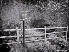 Senaitive Wildlife Area - HFF! (JSB PHOTOGRAPHS) Tags: img0711 copy senaitive wildlife area infrared canon powershot a85 bw fence fencefriday hff deltaponds eugeneoregon sign shadow bushes grass areaclosed