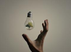 save the nature (Adrian Limani) Tags: nature lightbulb light creative conceptual miniature inspiration idea