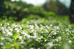 Lost in bokeh (martin_king.photo) Tags: begintogrow bokeh bokehlicious lostinbokeh spring2017 simple beautiful beauty martin king photo weather countryside naturpur springishere groud greenfields welovebokeh