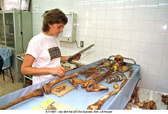 0000330404-004 (ngao5) Tags: anthropology argentinaandsciences bolivia boliviahistory bone bones caaf cheguevara interiorview laboratory lineupofmaterial reconstitution regionofbolivia santacruz science scientificresearch skeleton skull socialsciences southamerica