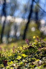 Kokoryczowe wzgórze (pedro4d) Tags: nikon f90 trioplan 10028 kodak portra 400vc expired film analog meyer optik görlitz swirly bokeh dof poznań polska polsna radojewo kokoryczka kokoryczowe wzgórze nature macro
