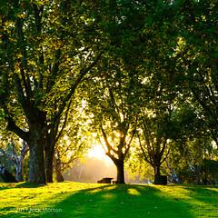 Albury Morning (nickmorton50) Tags: albury nsw australia