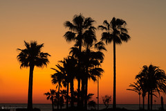 SUNRISE AT CALLOR MILLOR (mark_rutley) Tags: majorca mallorca callormillor travel vacation holiday spain palmtrees sunrise silhouette beach sea coast balearicislands