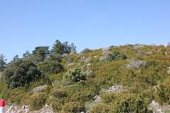 IMG_0617 (Gilles Couteau) Tags: provence vaucluse ventoux montventoux