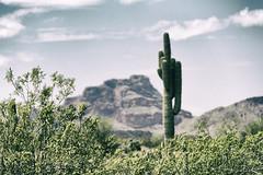 Cactus (Plonq) Tags: arizona vacation travel cactus mountain hill rocks
