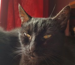 Leeloo (Clare_leeloo) Tags: cats blackcat kitty cutecat felines catseyes eyes