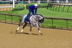 IMG_8318_01 (Sagrasa) Tags: churchilldowns kentucky horseracing thoroughbred