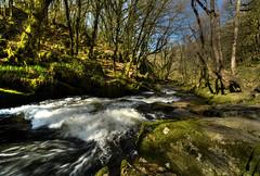 Rushing Through (suerowlands2013) Tags: golithafalls drayneswood bodminmoor englishnature nationalnaturereserve waterfall river spring trees gorge woods riverfowey fastflowingwater cornwall