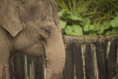 (_jypictures) Tags: elephant animalphotography animals animal canon7d canon canonphotography chester chesterzoo zoo zoophotography wildlife wildlifephotography nature naturephotography