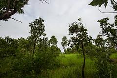 Bush (betadecay2000) Tags: dark clouds arnhem arnheim highway weather wet season wetter weer meteo wolken wolke dunkel cloud cloudy stase rue road street straat urlaub travel monsoon bush busch australia australie australien austral aussie aus oz